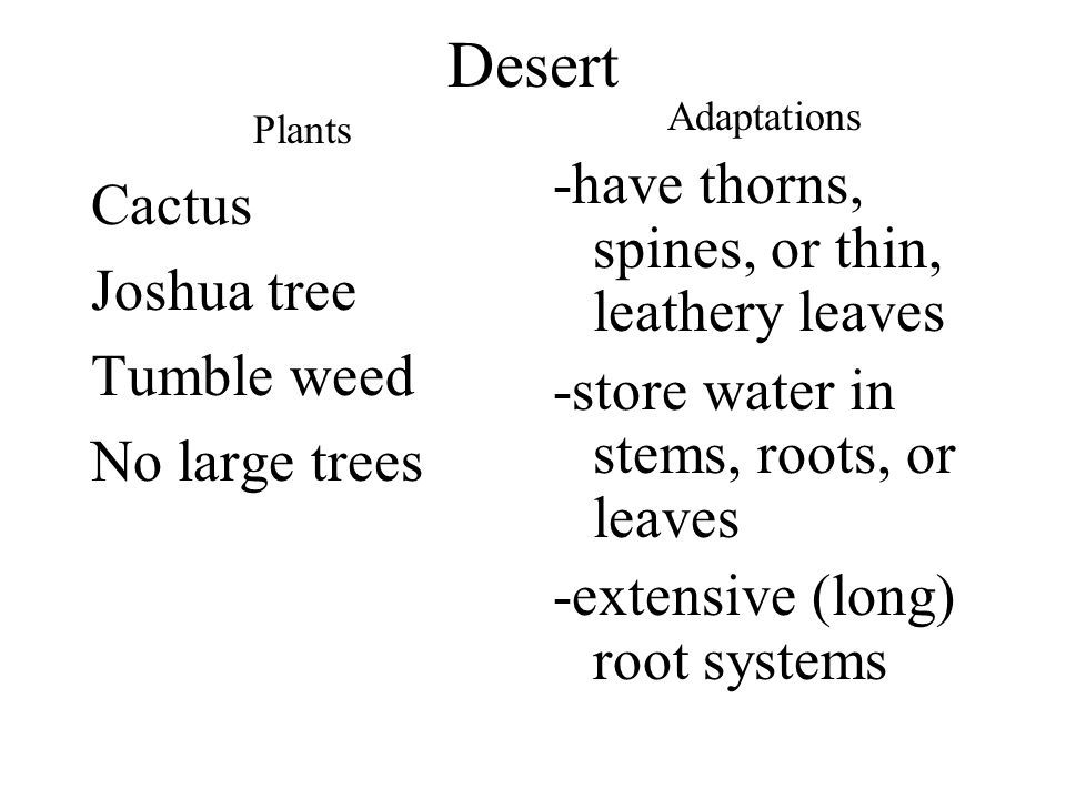 Desert -have thorns, spines, or thin, leathery leaves Cactus