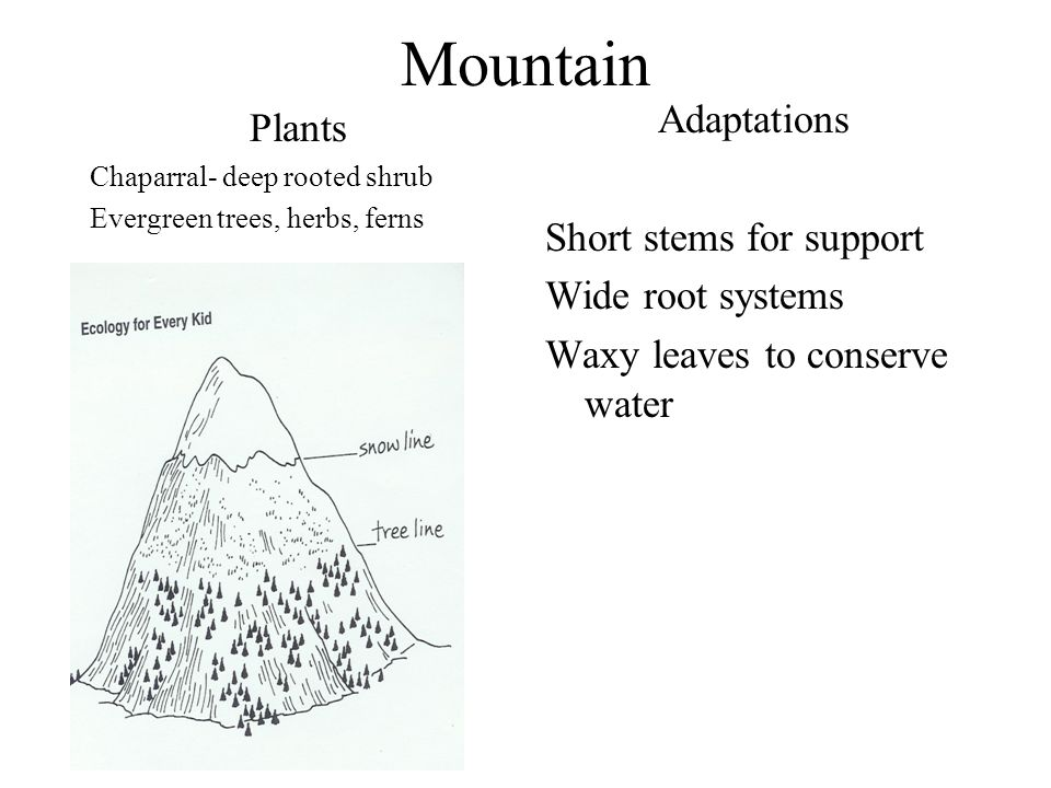 Mountain Adaptations Plants Short stems for support Wide root systems
