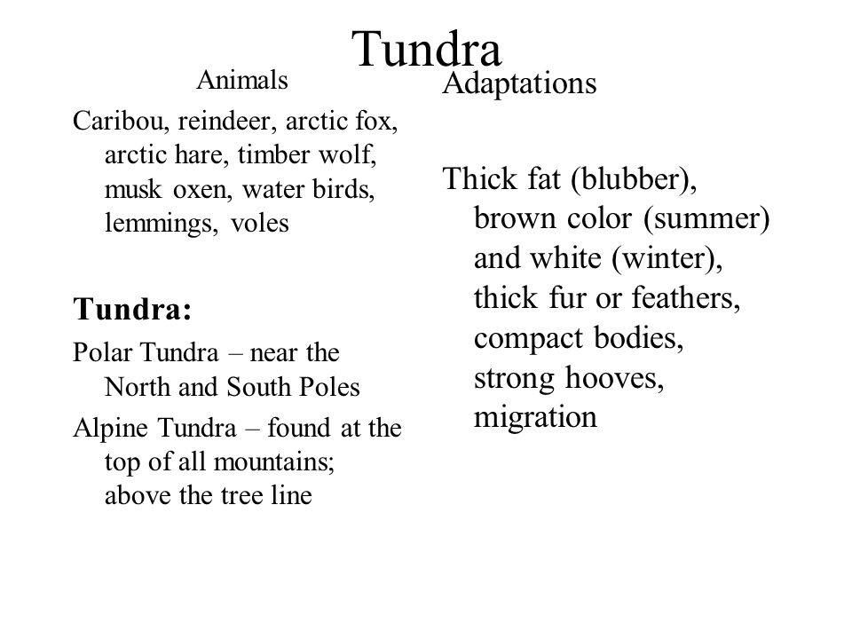 Tundra Animals. Caribou, reindeer, arctic fox, arctic hare, timber wolf, musk oxen, water birds, lemmings, voles.
