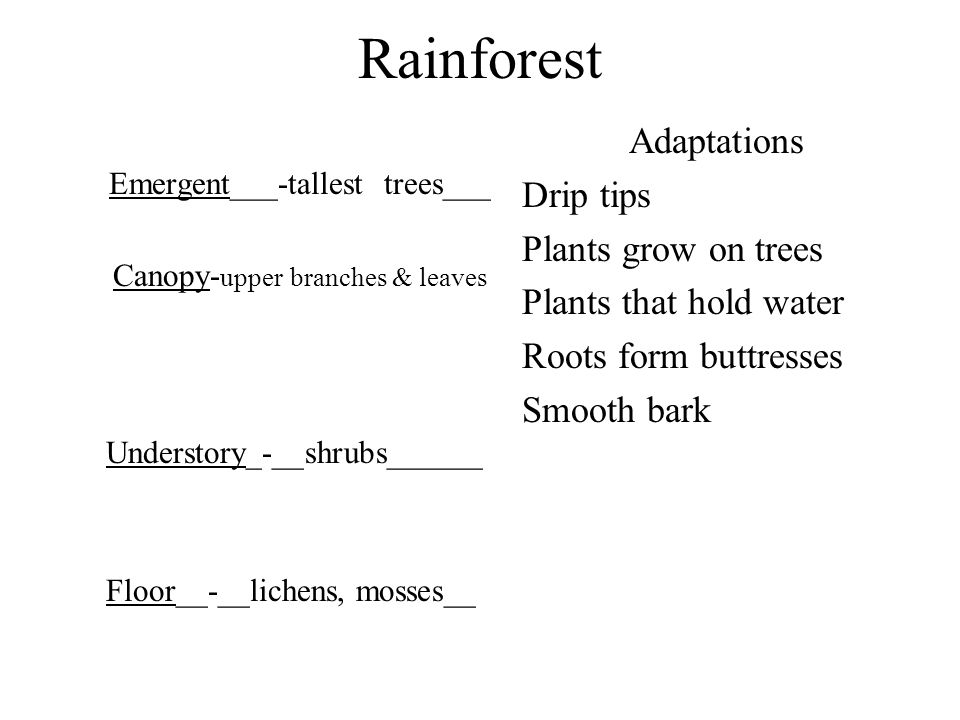 Rainforest Adaptations Drip tips Plants grow on trees
