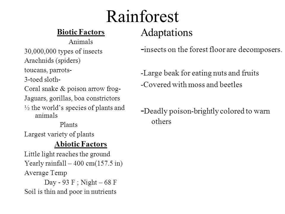 Rainforest Adaptations -insects on the forest floor are decomposers.