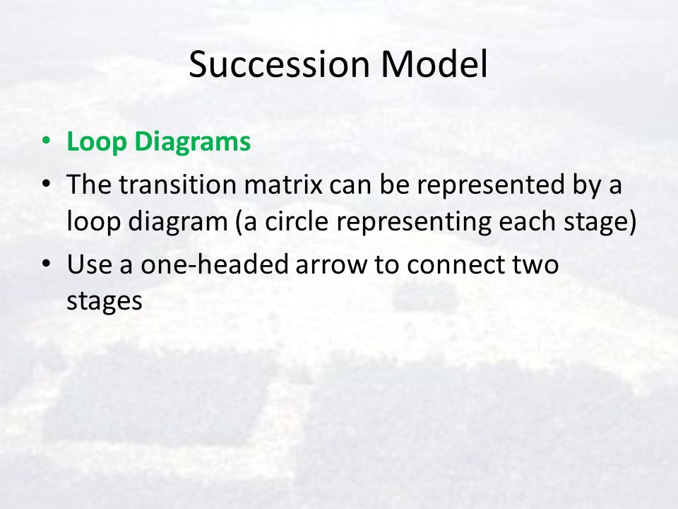 Succession Model Loop Diagrams