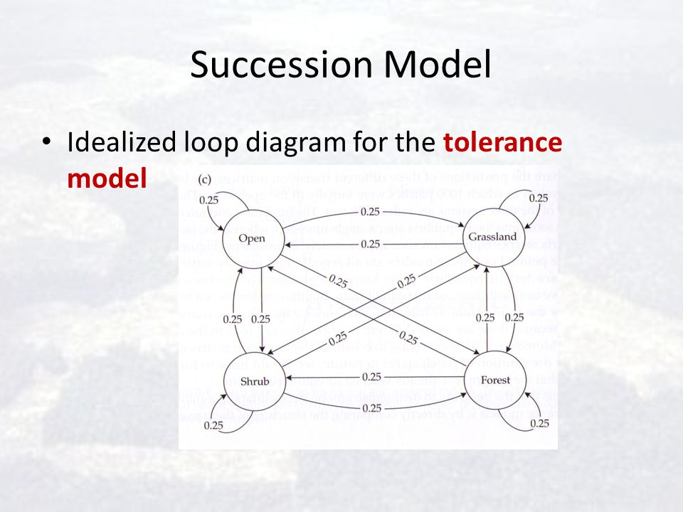 Succession Model Idealized loop diagram for the tolerance model