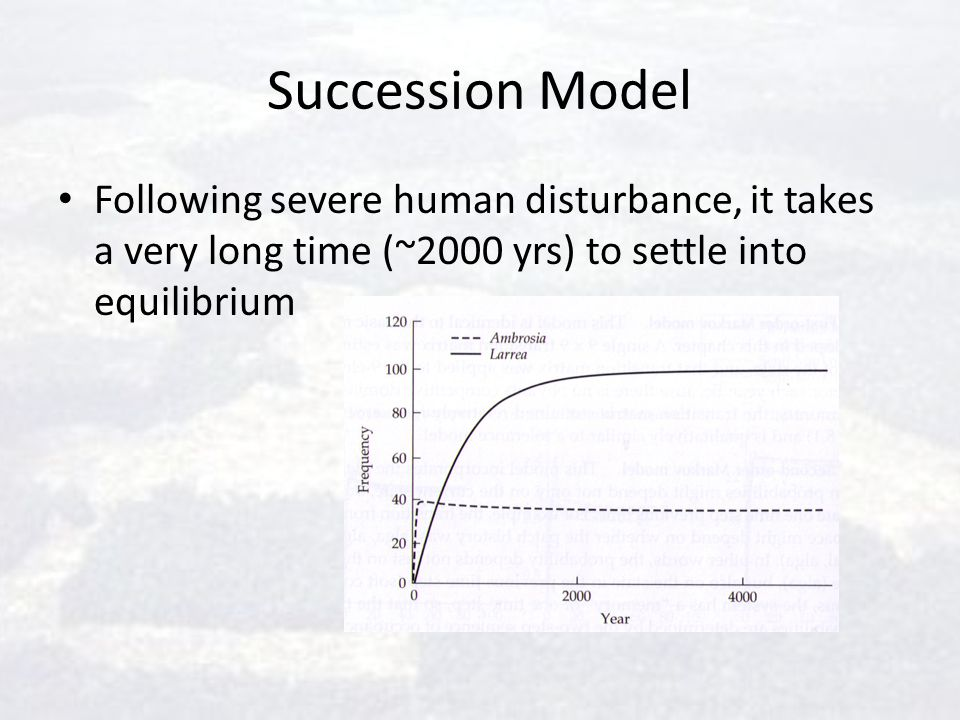 Succession Model Following severe human disturbance, it takes a very long time (~2000 yrs) to settle into equilibrium.