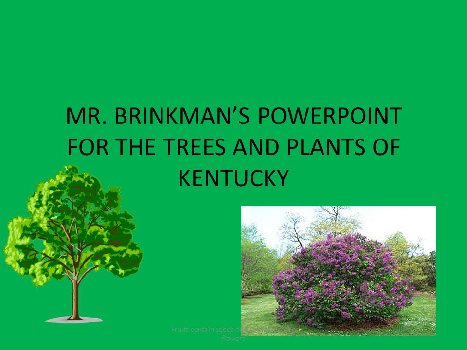 MR. BRINKMAN'S POWERPOINT FOR THE TREES AND PLANTS OF KENTUCKY