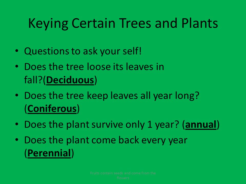 Keying Certain Trees and Plants