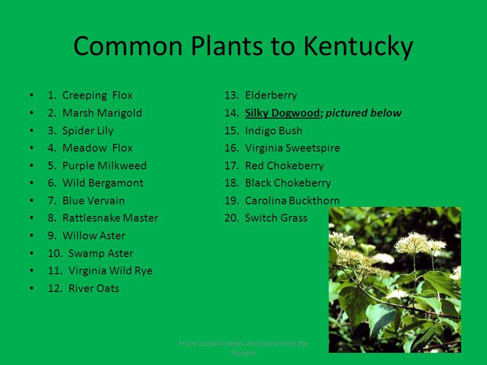 Common Plants to Kentucky