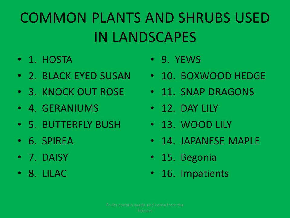 COMMON PLANTS AND SHRUBS USED IN LANDSCAPES