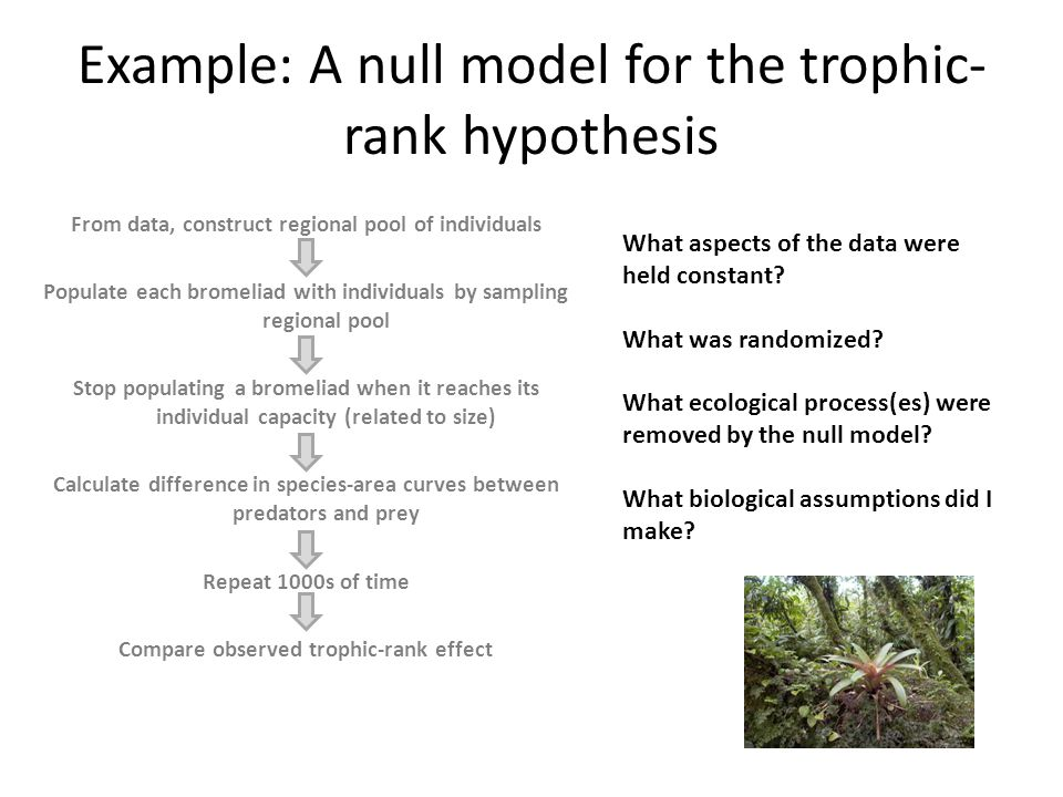 Example: A null model for the trophic-rank hypothesis