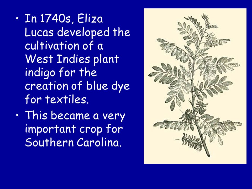 In 1740s, Eliza Lucas developed the cultivation of a West Indies plant indigo for the creation of blue dye for textiles.