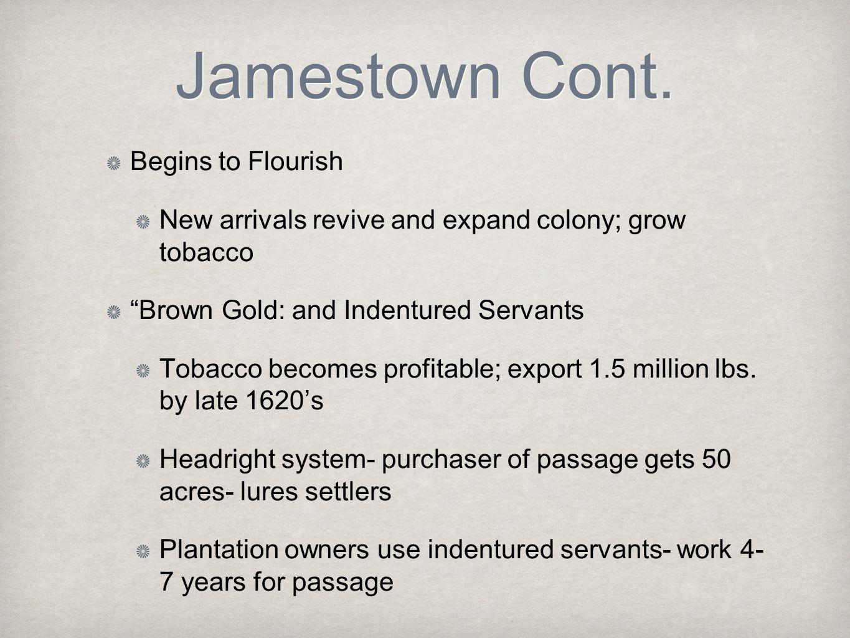 Jamestown Cont. Begins to Flourish
