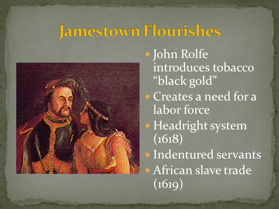 Jamestown Flourishes John Rolfe introduces tobacco black gold