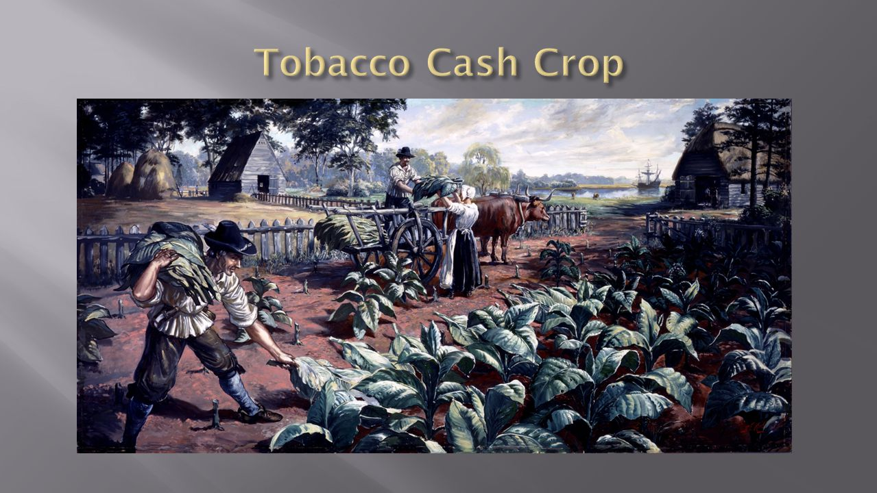 Tobacco Cash Crop