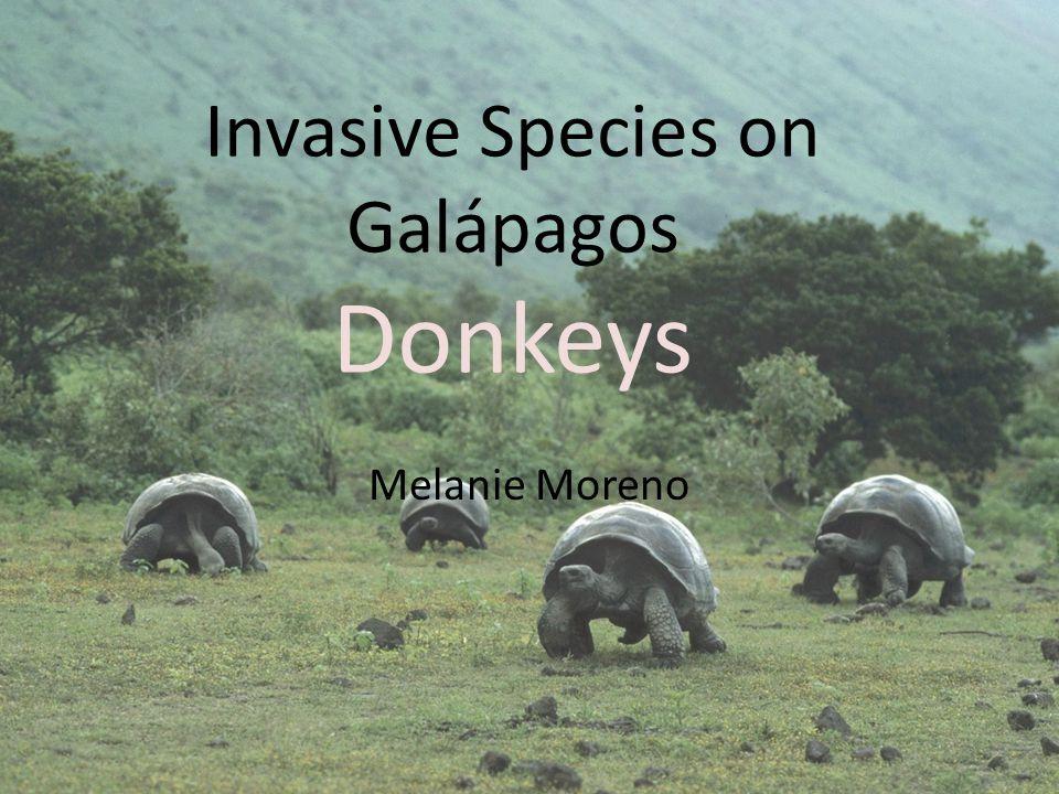 Invasive Species on Galápagos Donkeys