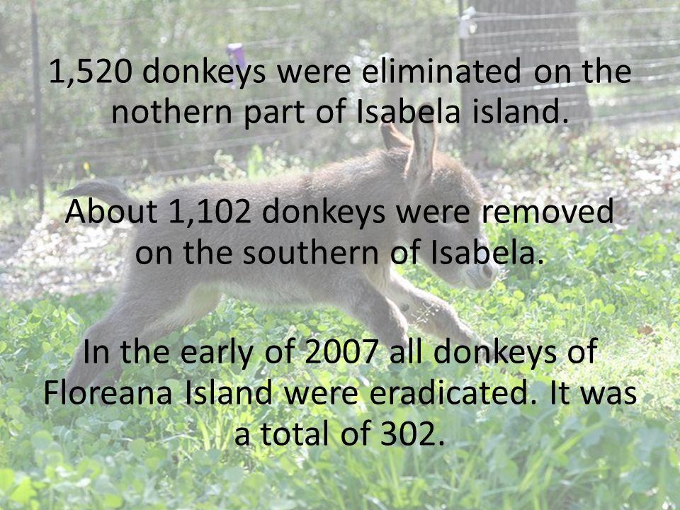 1,520 donkeys were eliminated on the nothern part of Isabela island
