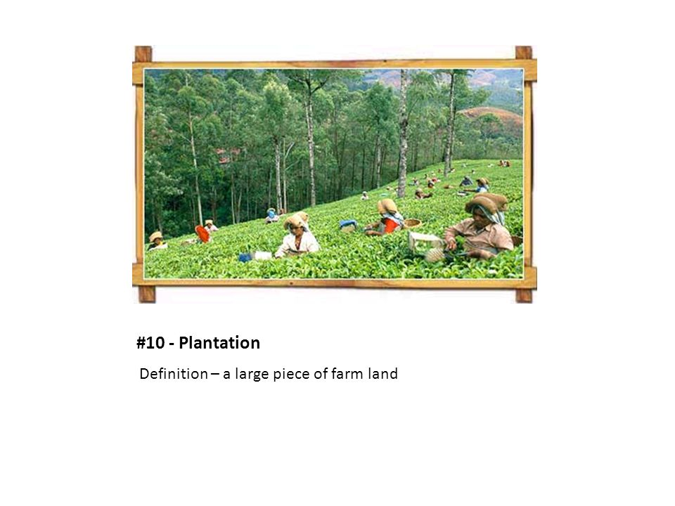#10 - Plantation Definition – a large piece of farm land