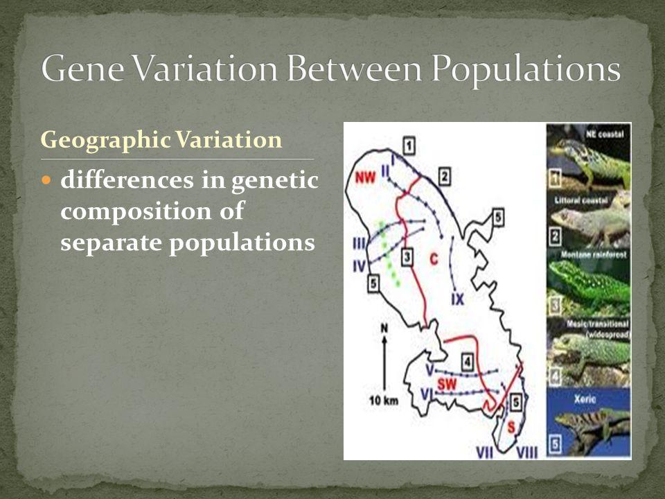Gene Variation Between Populations