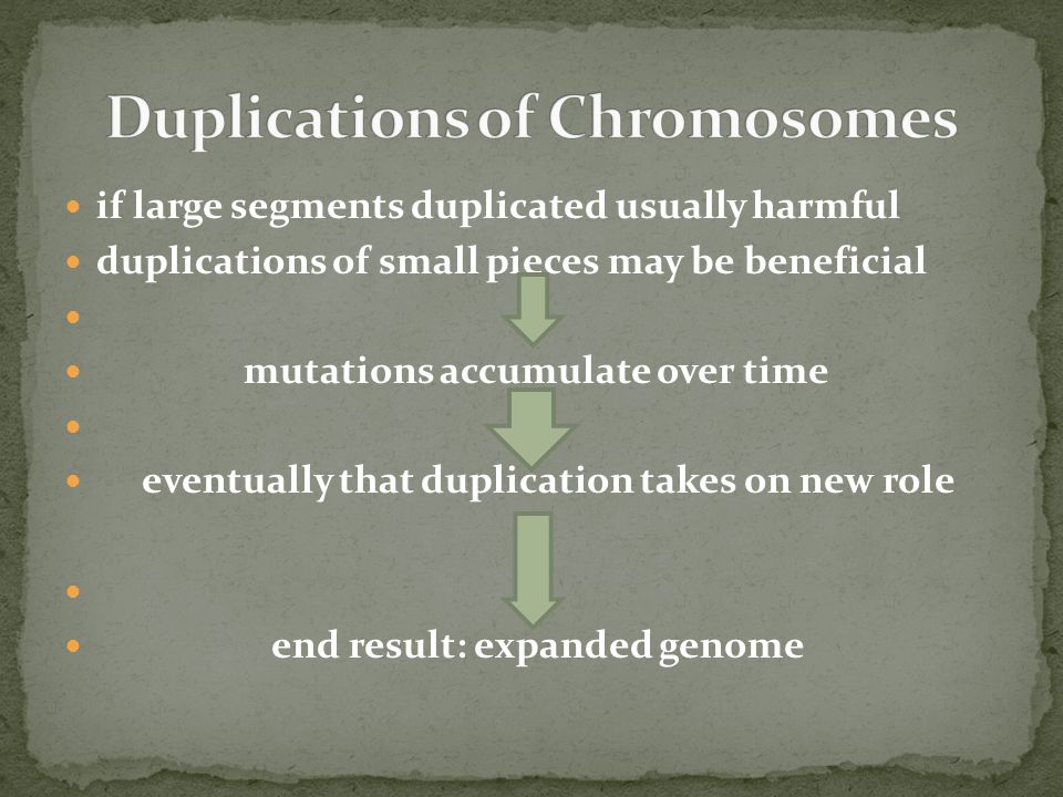 Duplications of Chromosomes