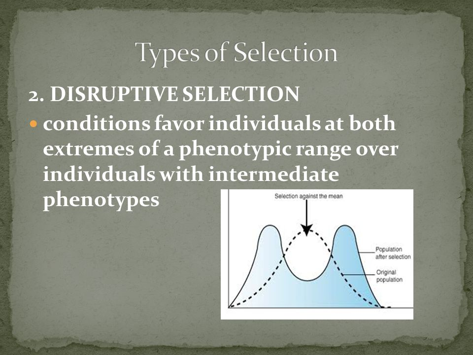 Types of Selection 2. DISRUPTIVE SELECTION