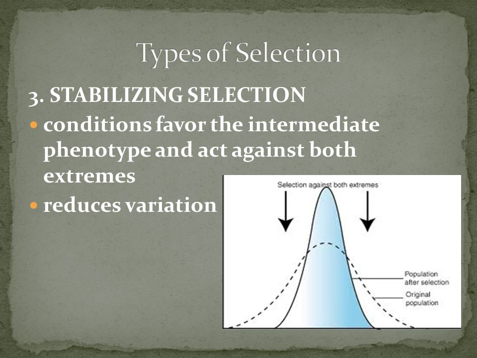 Types of Selection 3. STABILIZING SELECTION