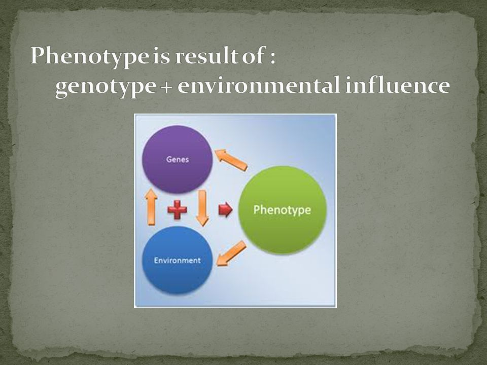 Phenotype is result of : genotype + environmental influence