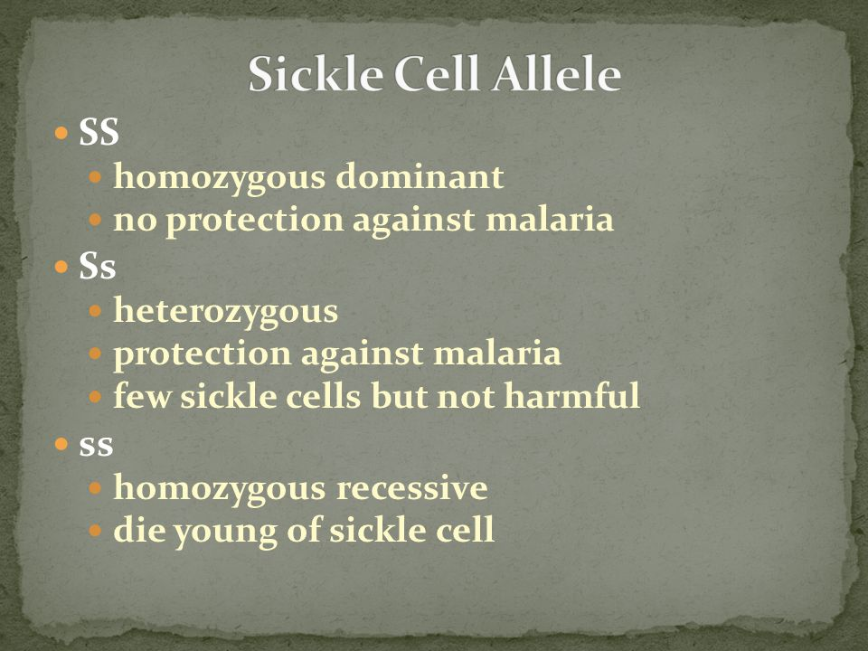 Sickle Cell Allele SS Ss ss homozygous dominant