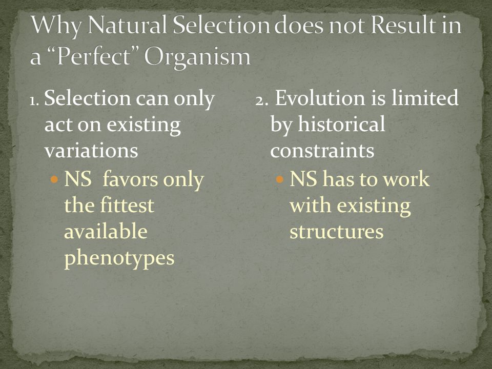 Why Natural Selection does not Result in a Perfect Organism