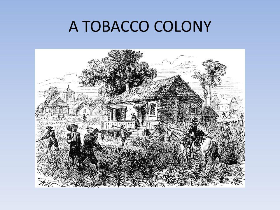 A TOBACCO COLONY