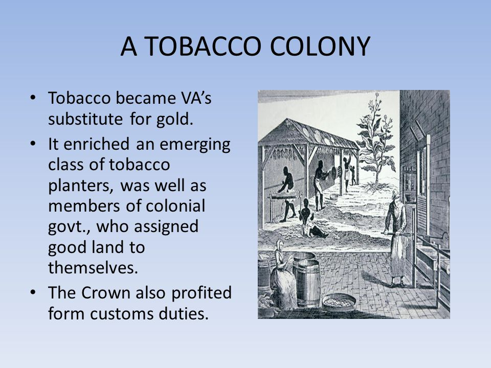 A TOBACCO COLONY Tobacco became VA's substitute for gold.