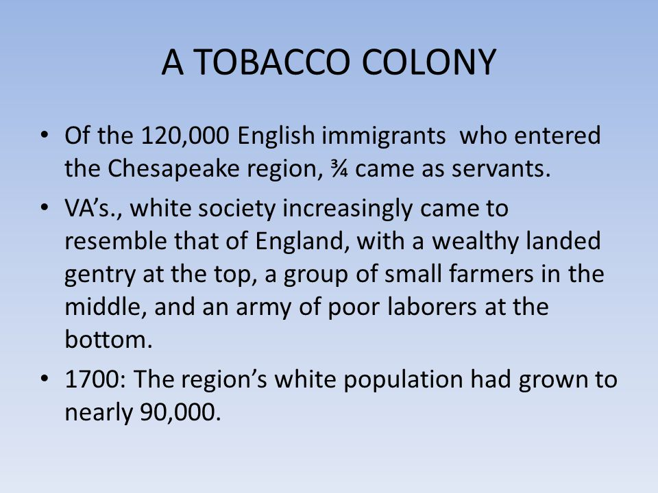 A TOBACCO COLONY Of the 120,000 English immigrants who entered the Chesapeake region, ¾ came as servants.