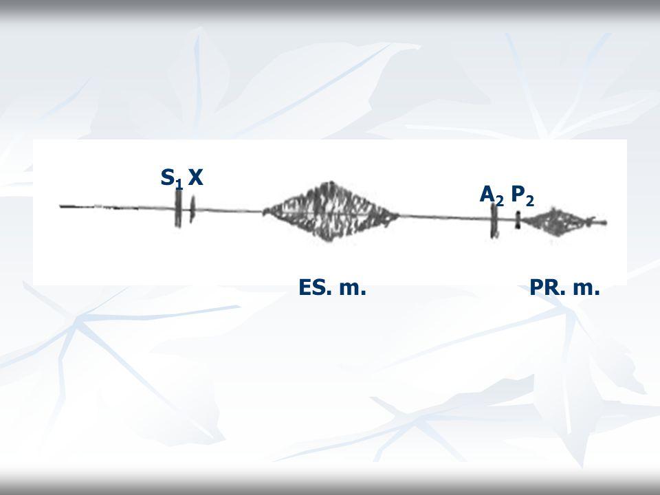 S1 X A2 P2 ES. m. PR. m.