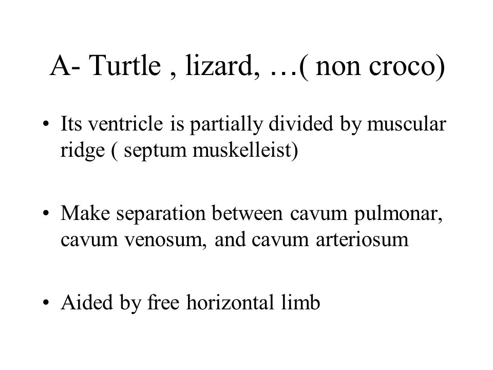 A- Turtle , lizard, …( non croco)