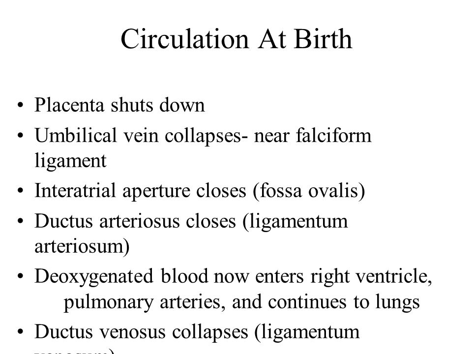 Circulation At Birth Placenta shuts down