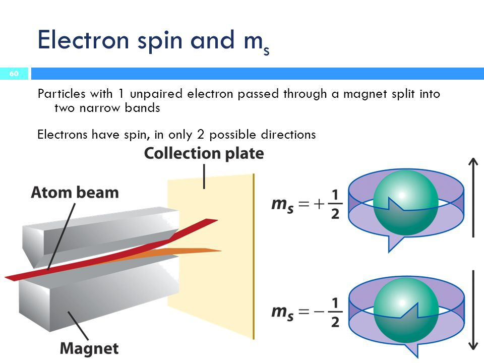 Electron spin and ms Particles with 1 unpaired electron passed through a magnet split into two narrow bands.