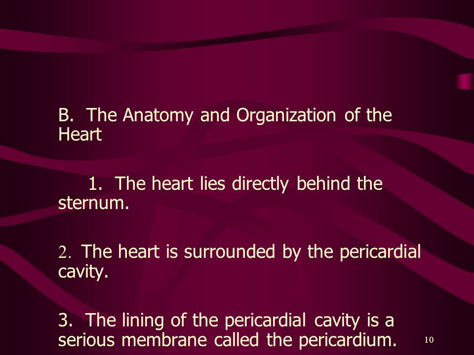 B. The Anatomy and Organization of the Heart