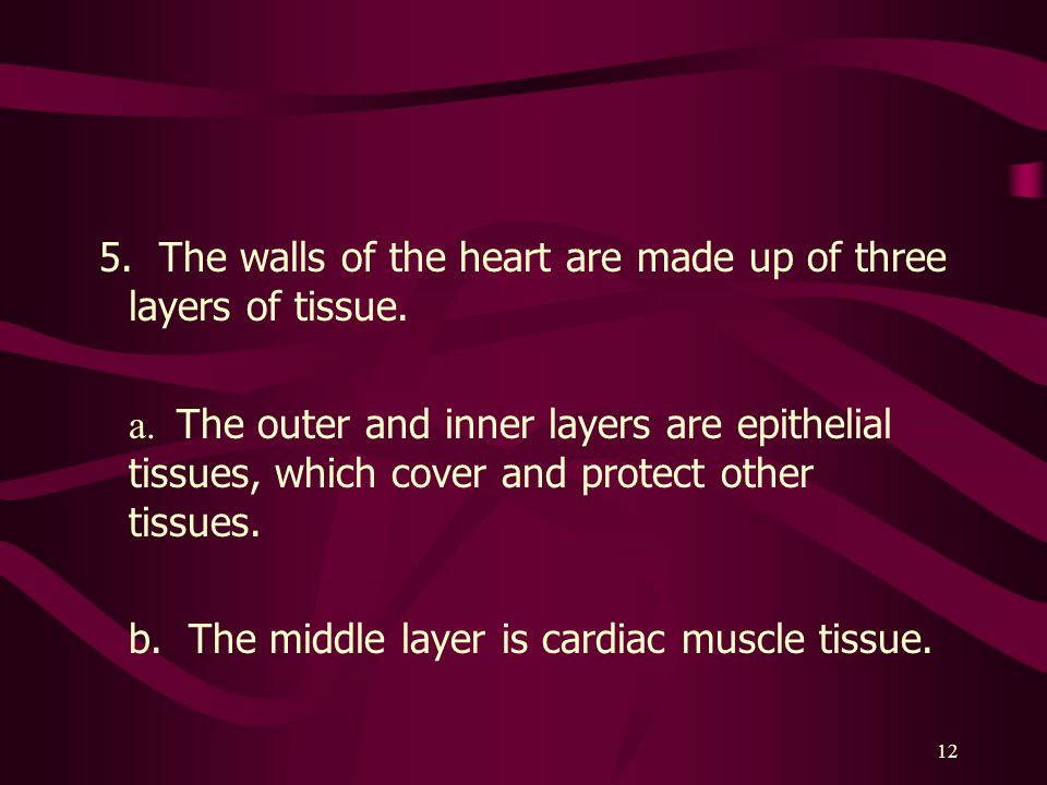 5. The walls of the heart are made up of three layers of tissue.