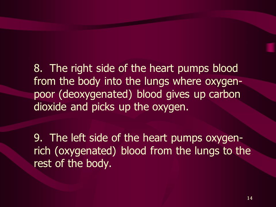 8. The right side of the heart pumps blood from the body into the lungs where oxygen-poor (deoxygenated) blood gives up carbon dioxide and picks up the oxygen.