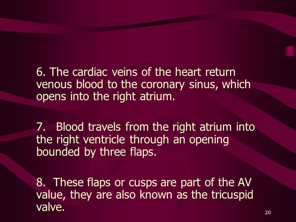 6. The cardiac veins of the heart return venous blood to the coronary sinus, which opens into the right atrium.