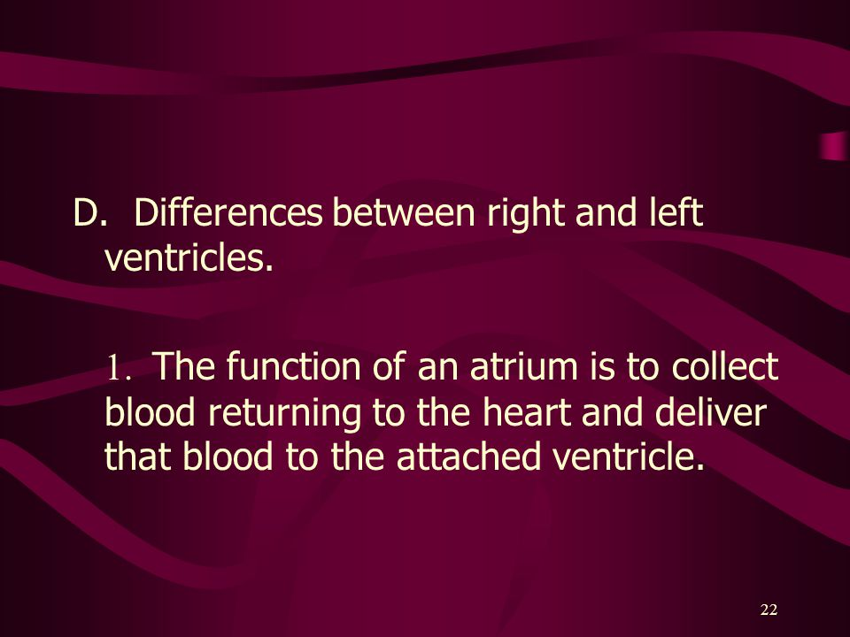 D. Differences between right and left ventricles.