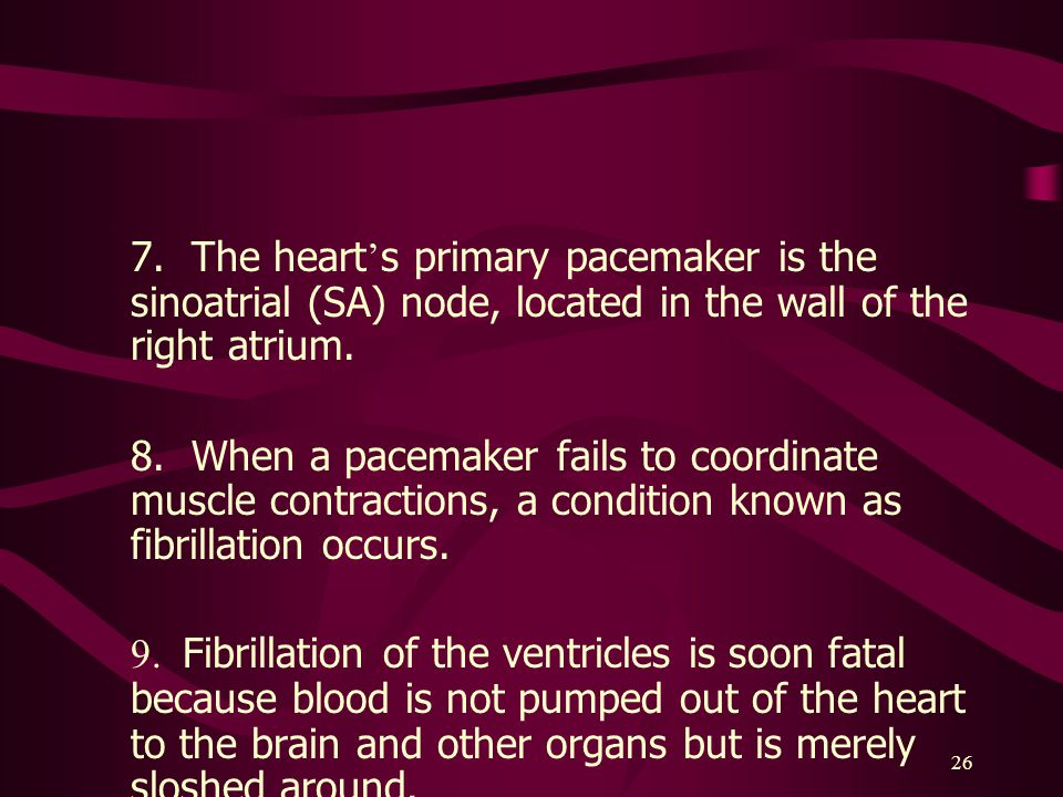 7. The heart's primary pacemaker is the sinoatrial (SA) node, located in the wall of the right atrium.