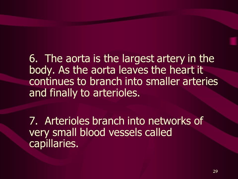 6. The aorta is the largest artery in the body