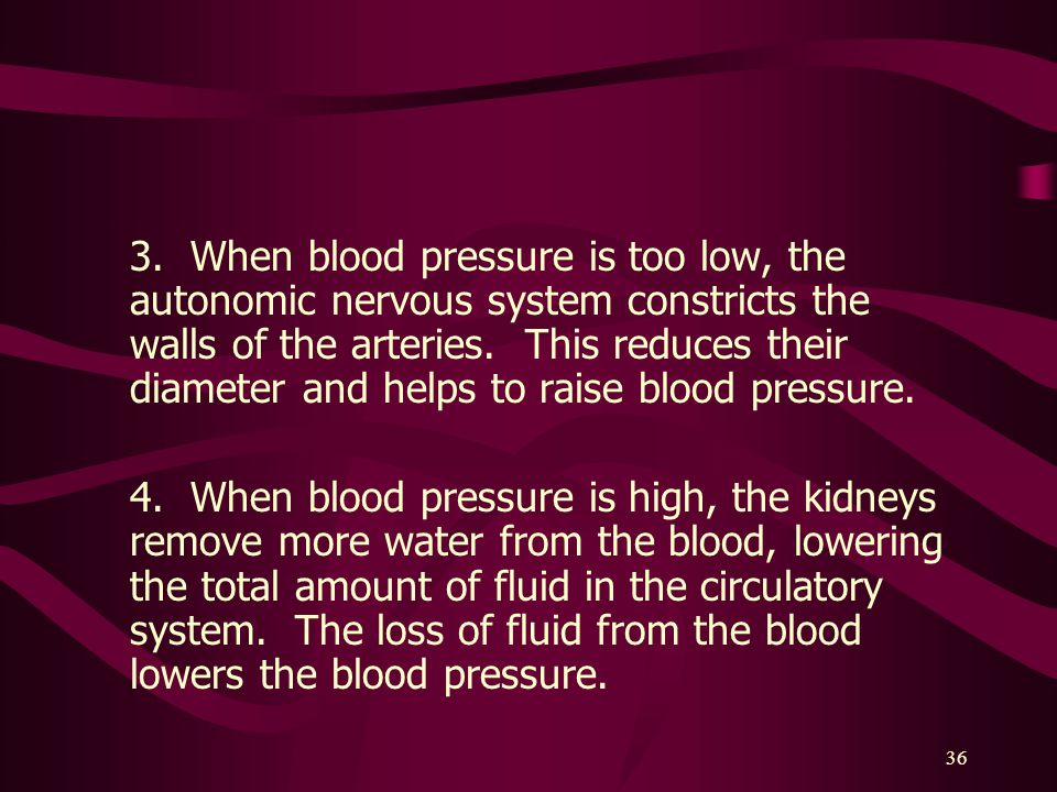 3. When blood pressure is too low, the autonomic nervous system constricts the walls of the arteries. This reduces their diameter and helps to raise blood pressure.