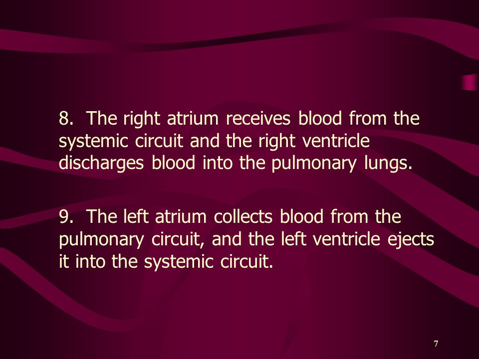 8. The right atrium receives blood from the systemic circuit and the right ventricle discharges blood into the pulmonary lungs.