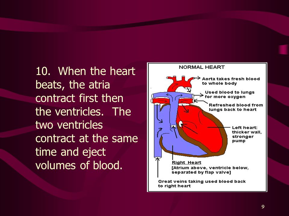 10. When the heart beats, the atria contract first then the ventricles