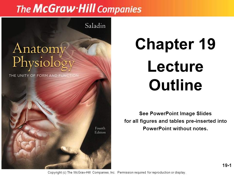 Chapter 19 Lecture Outline