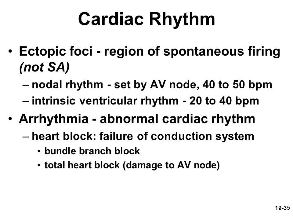 Cardiac Rhythm Ectopic foci - region of spontaneous firing (not SA)