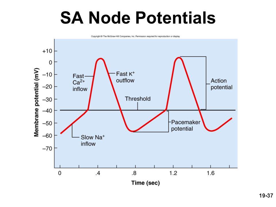 SA Node Potentials