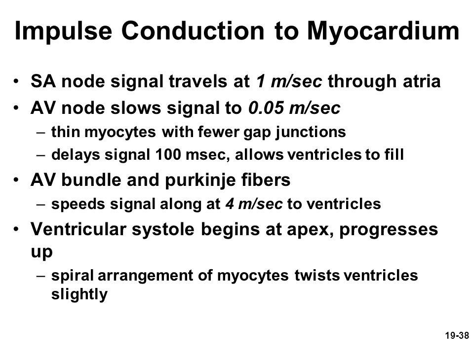 Impulse Conduction to Myocardium