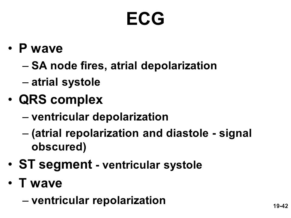 ECG P wave QRS complex ST segment - ventricular systole T wave