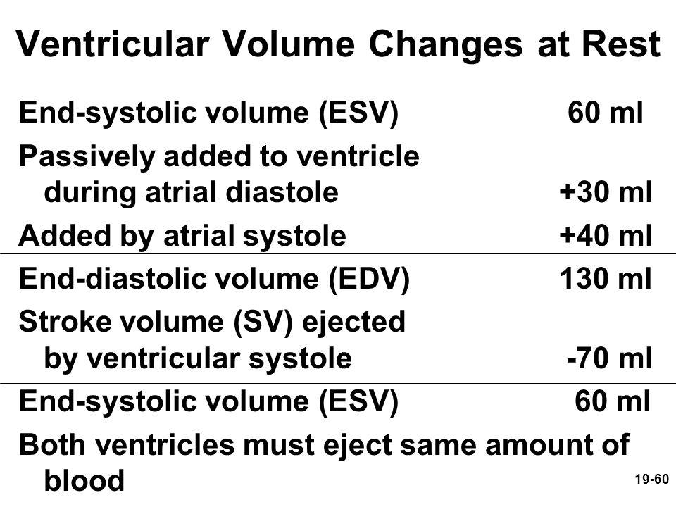 Ventricular Volume Changes at Rest